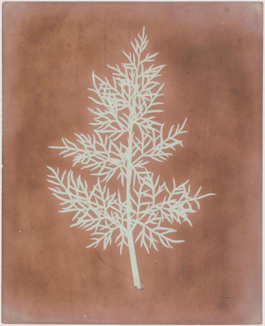 William Henry Fox TALBOT (English, 1800-1877) Leaf study, probably 1841 Photogenic drawing negative 22.9 x 18.6 cm