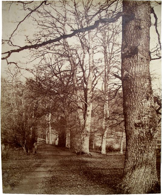 "Benjamin Brecknell TURNER (English, 1815-1894) ""In Loseley Park""*, 1852-1854 Albumen print from a waxed calotype negative 27.0 x 22.4 cm Titled in pencil on verso"