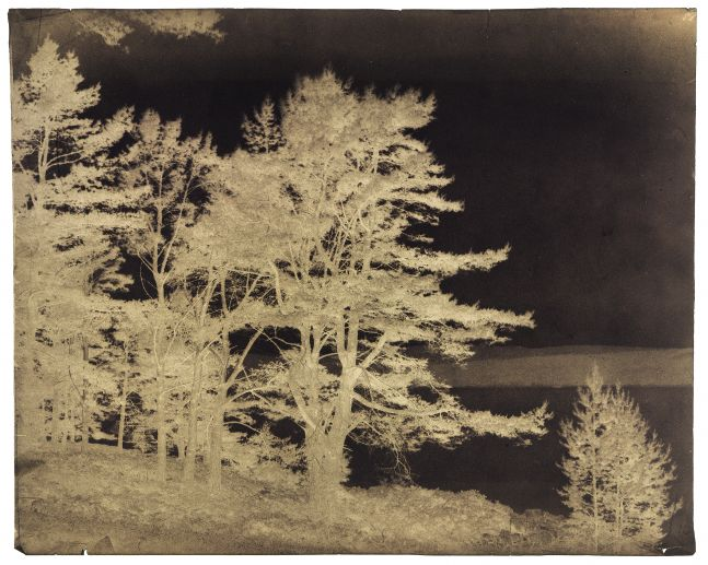 """Captain Horatio ROSS (Scottish, 1801-1886) """"Fir trees on the banks of Dornochs Firth between Ardgay and Fearn"""", 1850s Waxed paper negative 27.9 x 35.2 cm"""