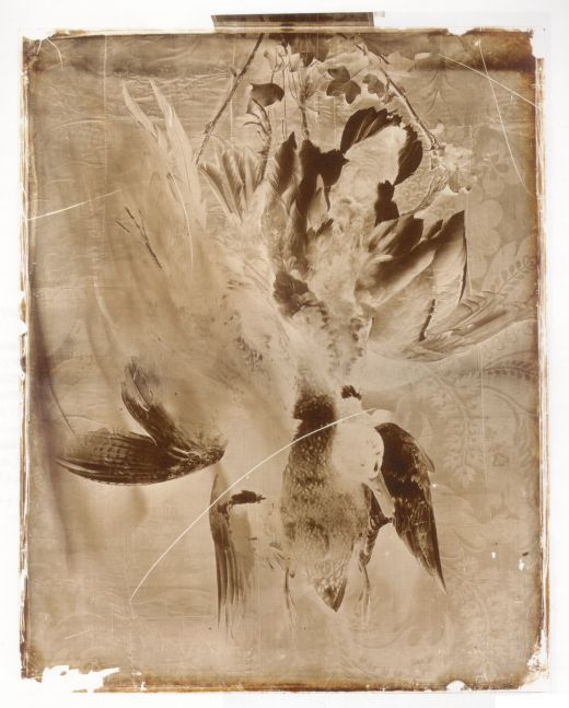 Charles NÈGRE (French, 1820-1880) Still life with game, circa 1855-1860 Collodion on glass negative 44.7 x 35.8 cm