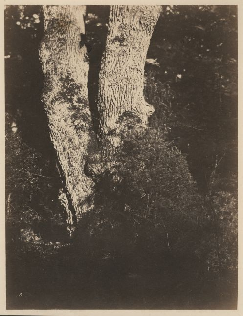 "Eugène CUVELIER (French, 1837-1900) Trees*, late 1850s Albumen print from a paper negative 26.2 x 20.1 cm mounted on 41.3 x 34.8 cm card Numbered ""3"" in the negative"