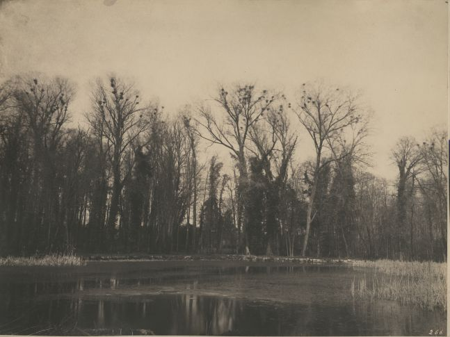 "Eugène CUVELIER (French, 1837-1900) ""Parc de Courances, nids de corbeaux"", 1860s Salt print 25.4 x 33.6 cm, mounted Numbered ""266"" in the negative. Titled in pencil on mount."