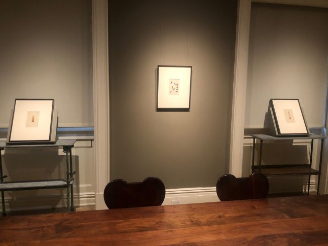 Critters: Hand-Colored Zoological Photomicrographs Installation View Three