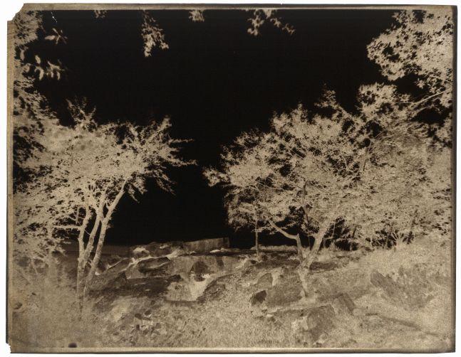 John Beasley GREENE (American, born in France, 1832-1856) Forêt de Fontainebleau, 1852-1853 Waxed paper negative 24.8 x 31.7 cm
