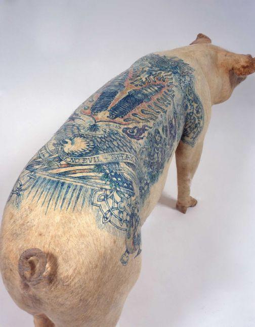 tattooed taxidermy pig