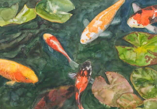 """Varied Koi  29"""" x 41""""  Watercolor"""