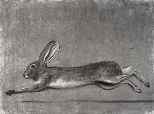 """Rabbit  22"""" x 30""""  Charcoal On Paper"""