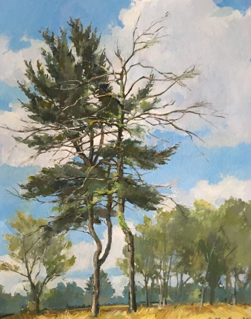 "Douglas Martenson, Pines II    15"" x 11.25""  Oil On Panel"