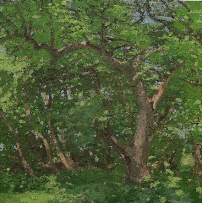 """Apple Tree, June  30"""" x 30""""  Oil On Wood"""