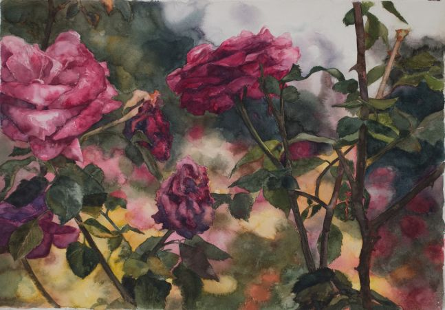 """Roses In Front  30"""" x 29""""  Watercolor"""
