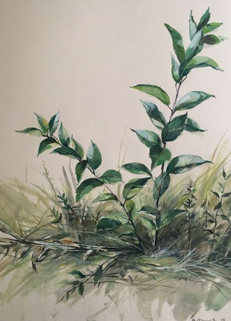 """Trampled Weed 22"""" x 15"""" Watercolor On Buff Paper"""