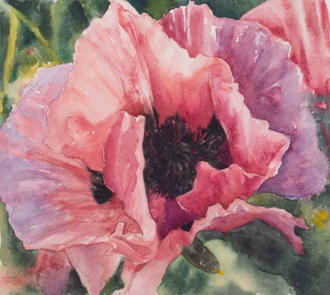 """Single Poppy  11.25"""" x 12""""  Watercolor"""