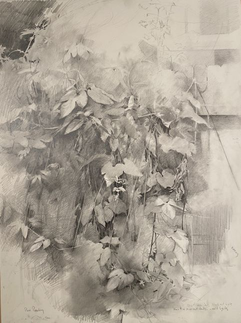 "Garden Study Of Hops  29.5"" x 22""  Graphite"