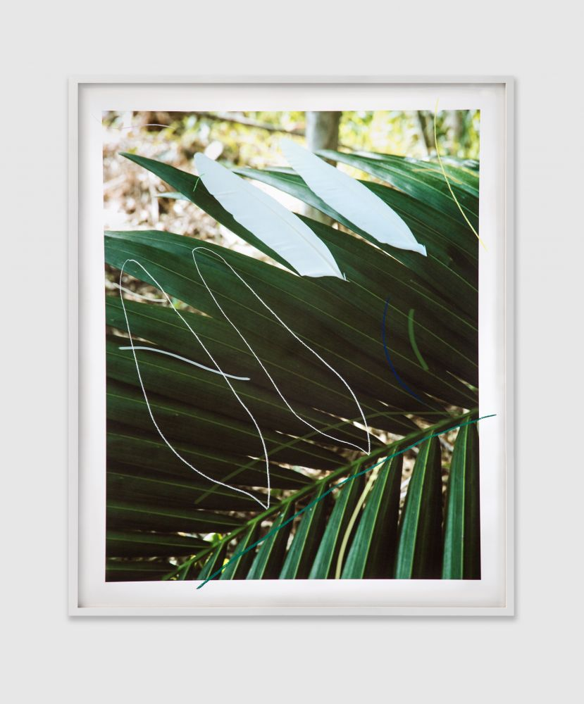 SAM FALLS  Untitled (Twin Feathers) 2016 Pastel on archival pigment print, framed   Frame 186.5 x 154.5 cm / 73 3/8 x 60 7/8 in   Unique  FALLS42432