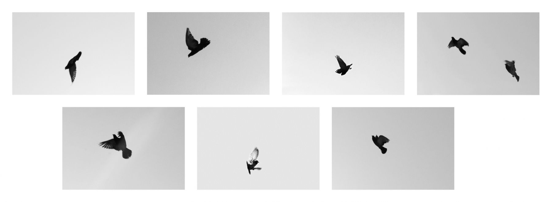 SHANNON EBNER  SIGNAL ESCAPES 2017 Archival Pigment Print mounted on aluminum, 7 parts  Ed. 1/5 + 2 AP Each 34.5 x 51 cm / 13 1/2 x 20 in  EBNER43508