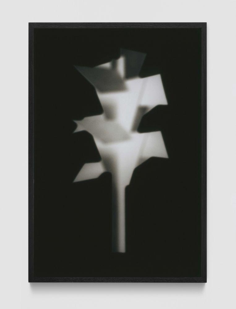 MARTIN BOYCE  Concrete Autumn (Phantom Tree)   2005 Gelatin silver print; framed  Ed. 6/10 + 2 AP  Frame 122.5 x 82.5 x 4 cm / 48 1/4 x 32 1/2 x 1 5/8 in  BOYCE34228