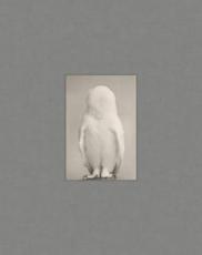 MASAO YAMAMOTO | TORI PUBLISHED BY RADIUS BOOKS