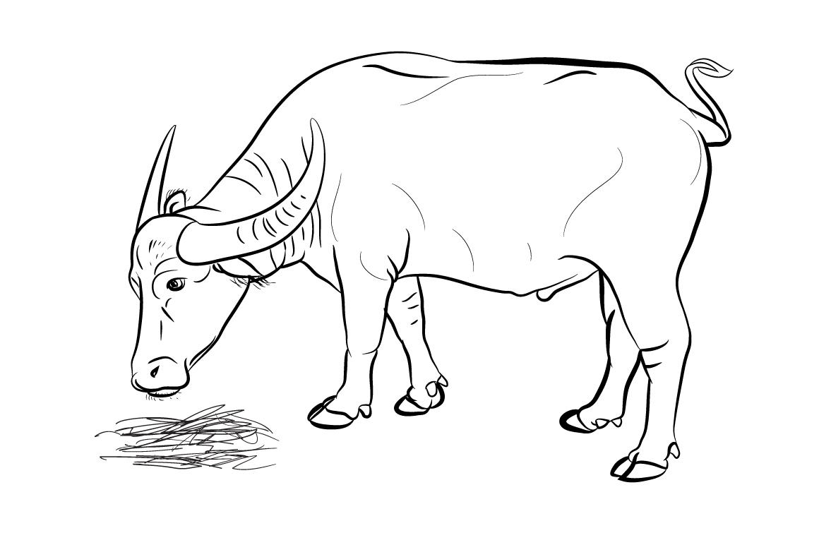 buffalo eating hay