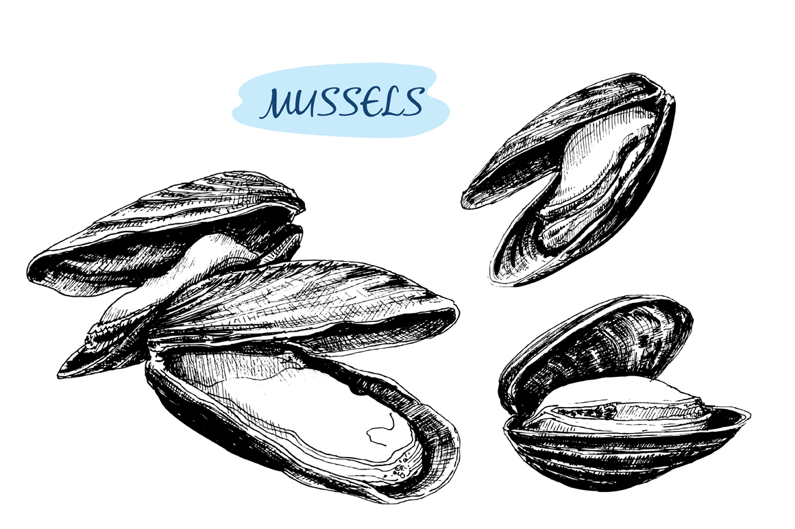 Mussels. Set of vector illustrations ~ Illustrations on ...