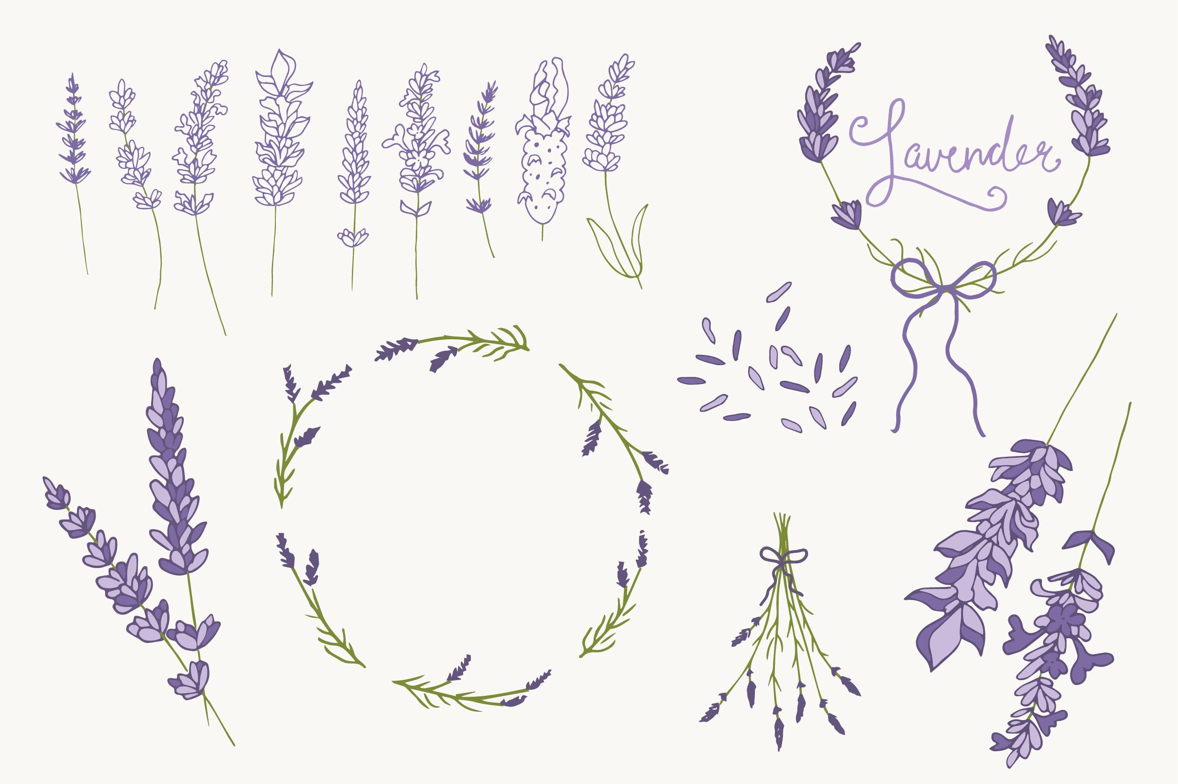 Lavender Clip Art Amp Vectors Graphics On Creative Market