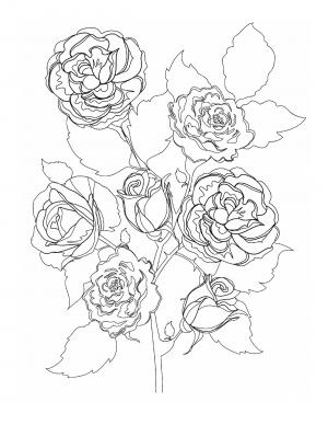 Illustration #947