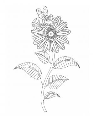 Illustration #956