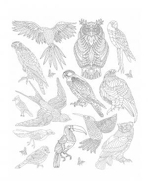 Illustration #716