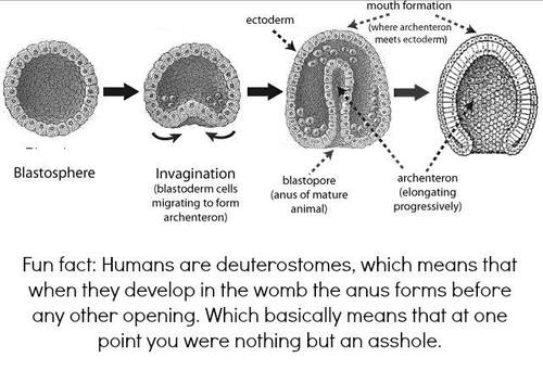 I have to write an essay about protostome development...?