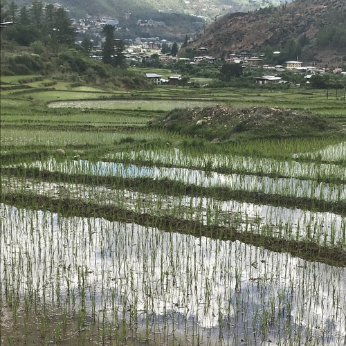 research topics in bhutan