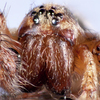 Hobo Spiders - Emily Sun thumbnail - click to view