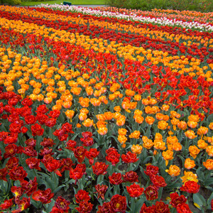 Rows of orange and red