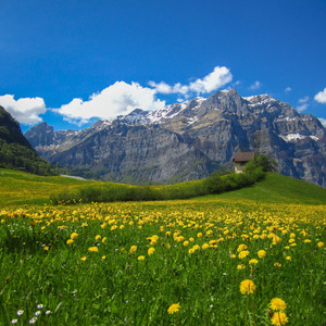 Alpine valley with dandelions