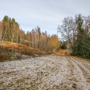 Frost-covered trail through Bymarka forest