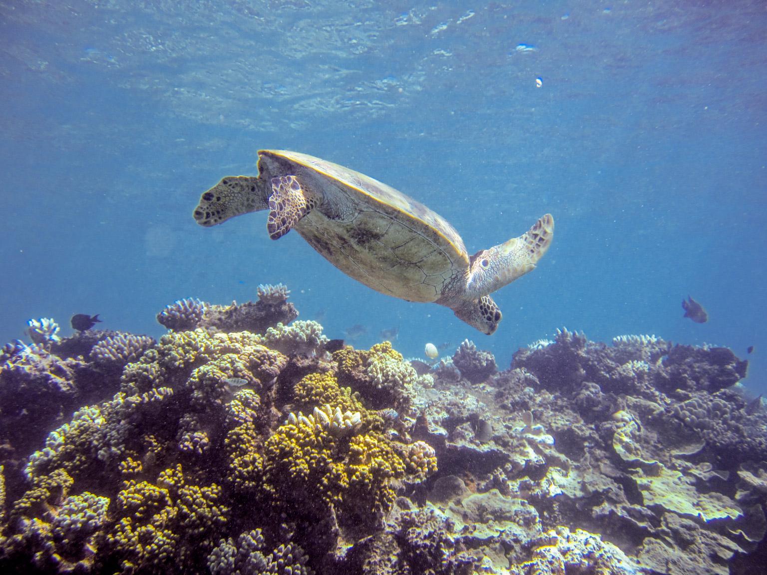 great barrier reef � february 2016 � douglas stebila