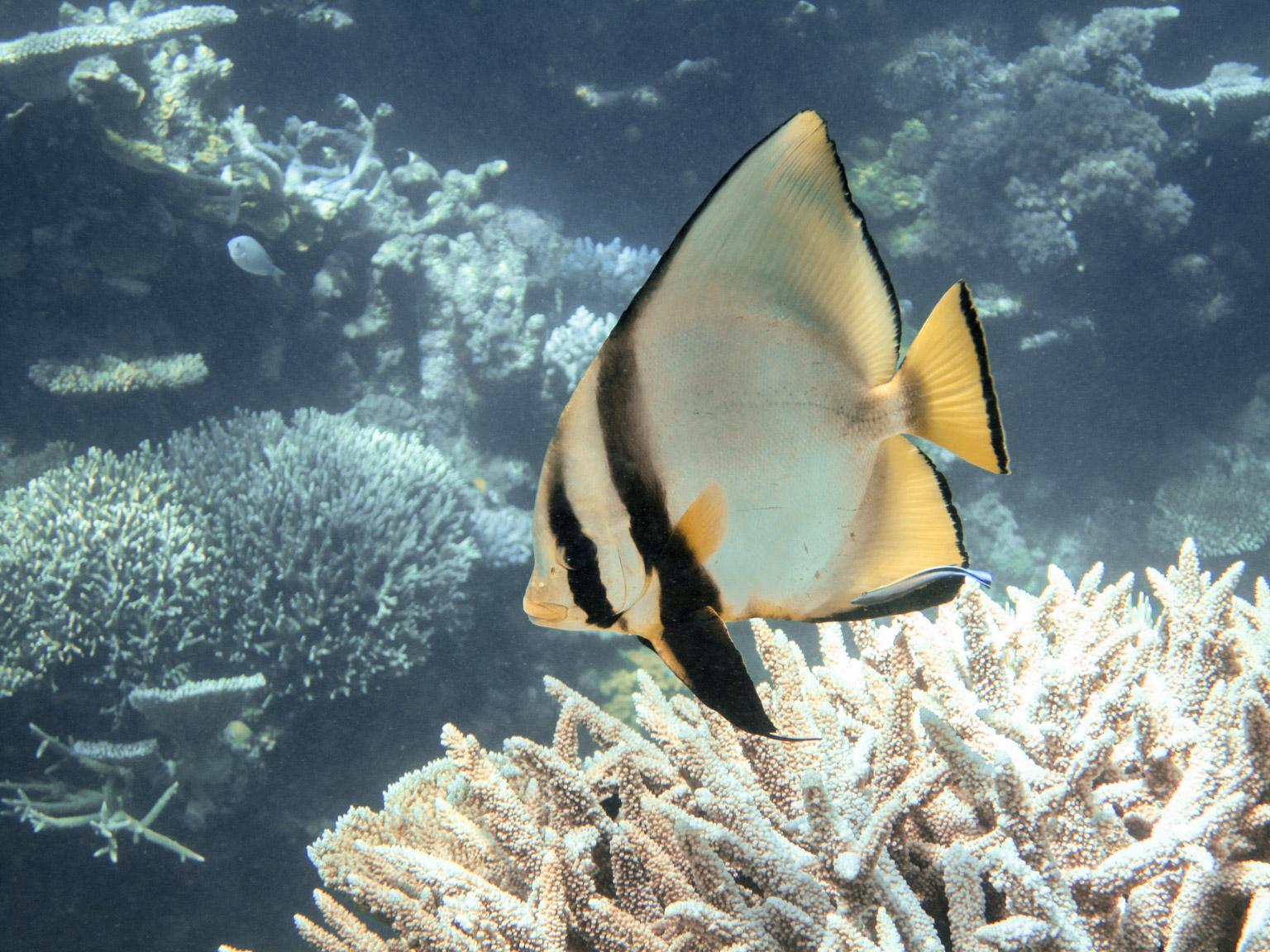 great barrier reef  u2022 february  2016  u2022 douglas stebila