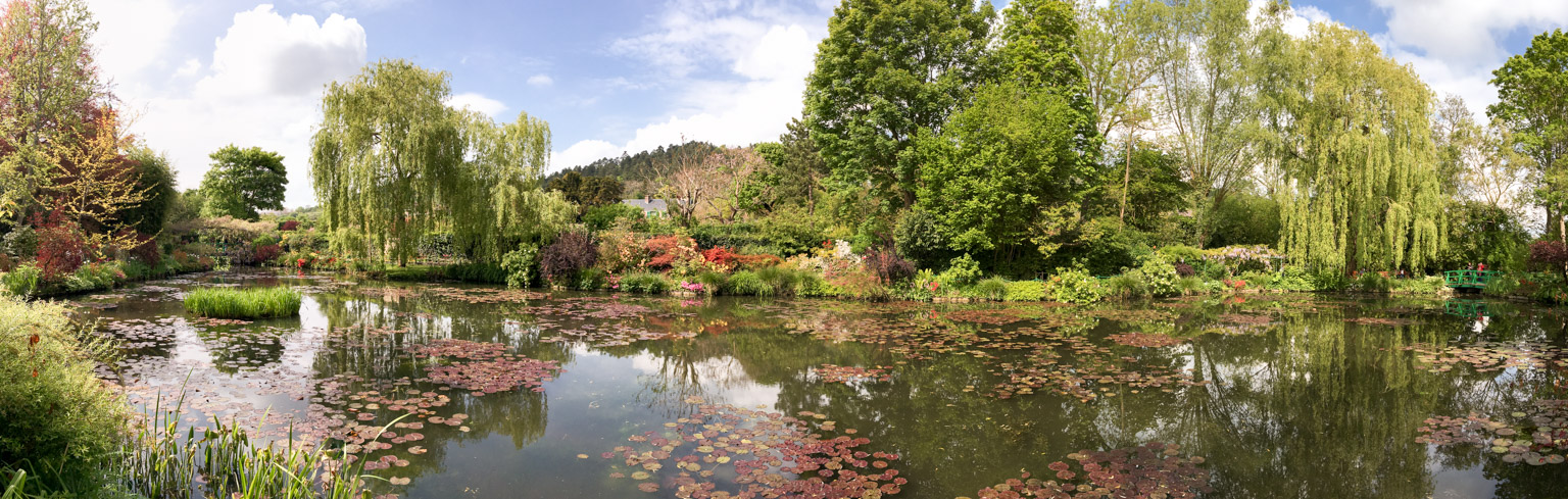 Panoramic view of water lilies pond