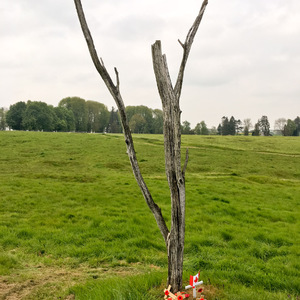 The Danger Tree in No Man's Land at Beaumont-Hamel