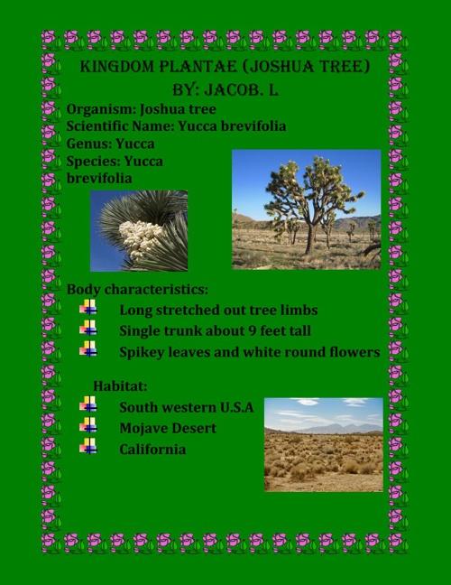 Kingdom plantae Joshua Tree