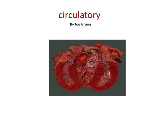 Green - Circulatory