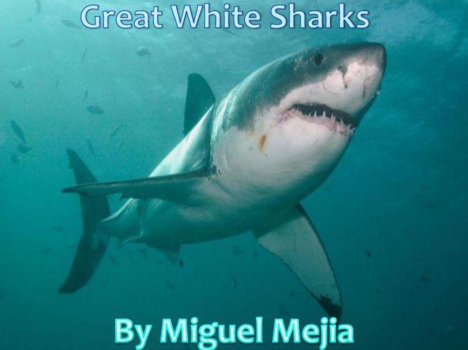 miguels shark book
