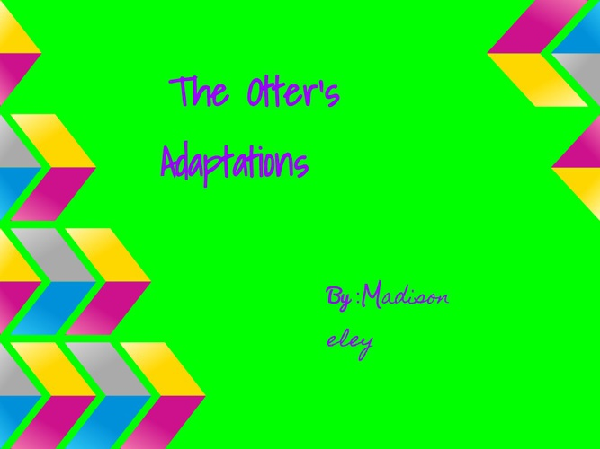 The Otter's Adaptations