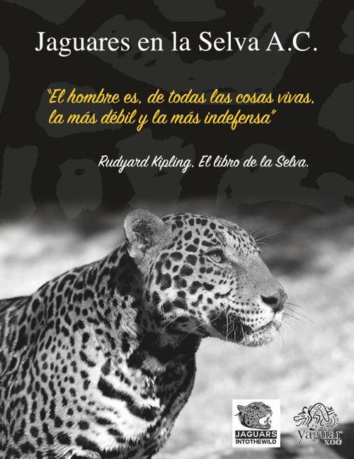 Jaguares en la Selva