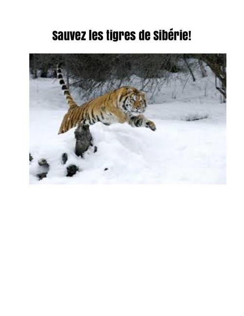 Sauvez les tigres de Sibérie!