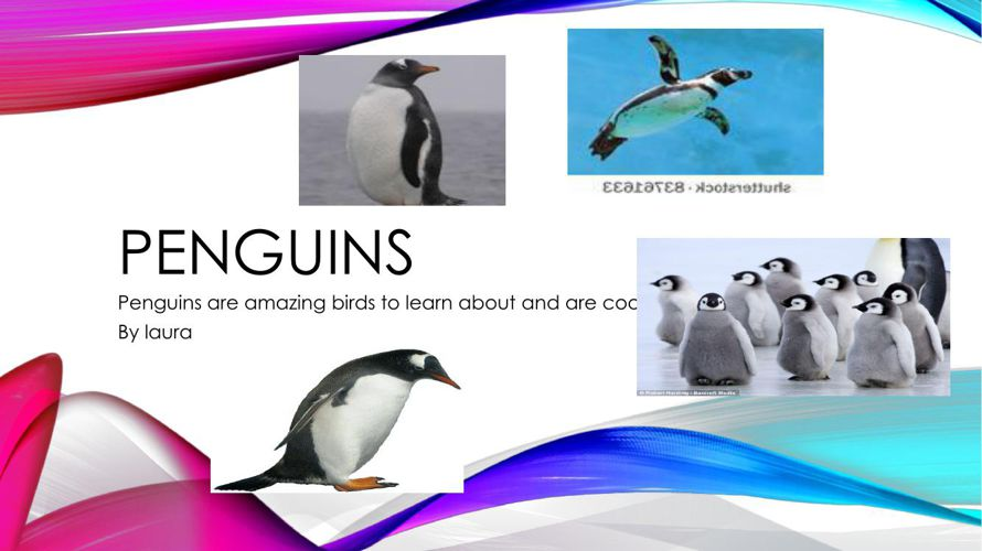 Penguins by Laura