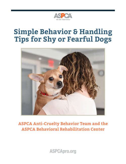 Tips for Handling Shy and Fearful Dogs