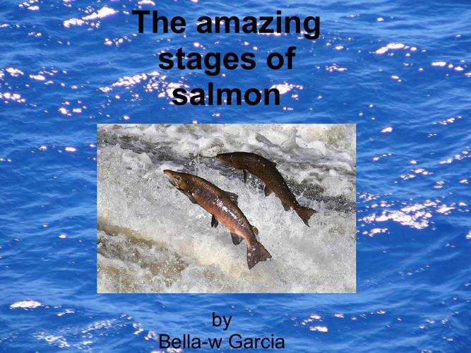 The Amazing Stages of Salmon!