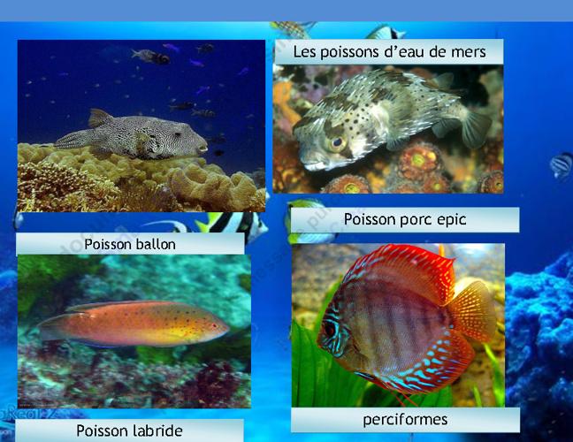 ";Les poissons de l'oceans    <a href=""http://www.refdirect.fr/"""