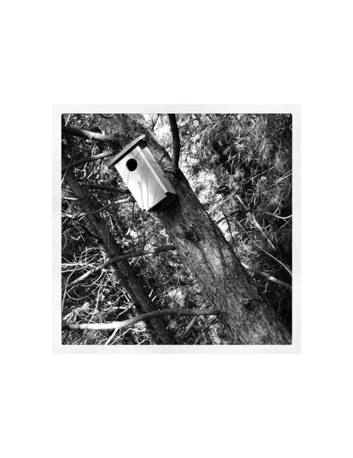 Instagram Photo Album: Black and White