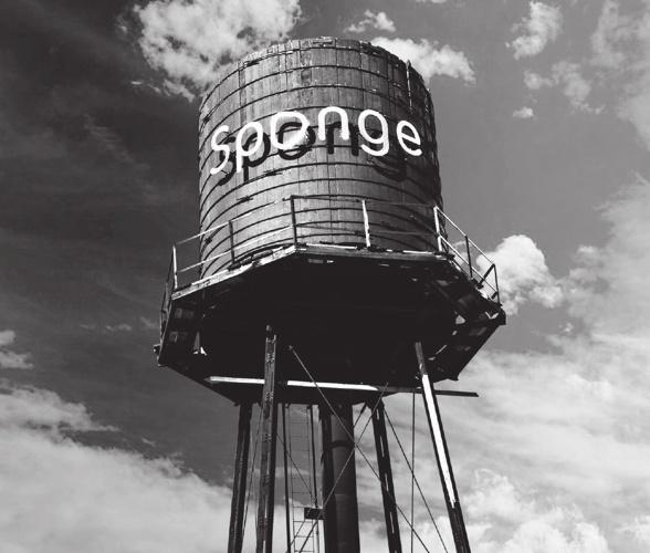 Meet Sponge