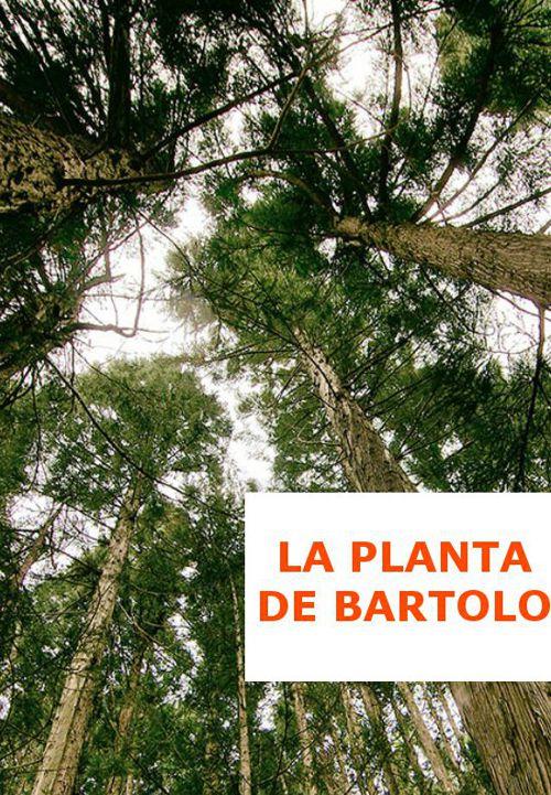 la_planta_de_bartolo